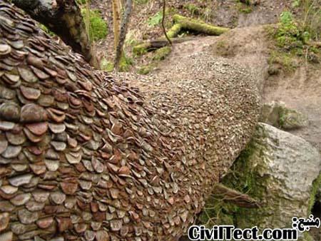 رسم کهن بریتانیایی - کوباندن سکه در داخل تنه درخت