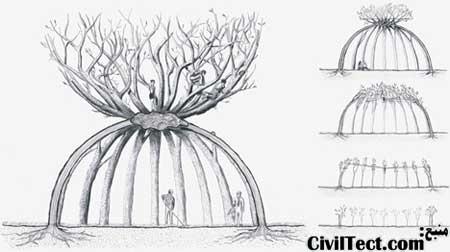 ایده و طرح اولیه - رشد درختان به مرور زمان و تشکیل شدن کلبه زنده