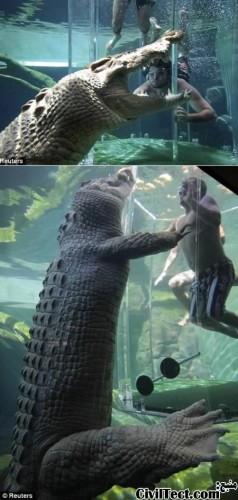شنا در قفس مرگ با تمساح