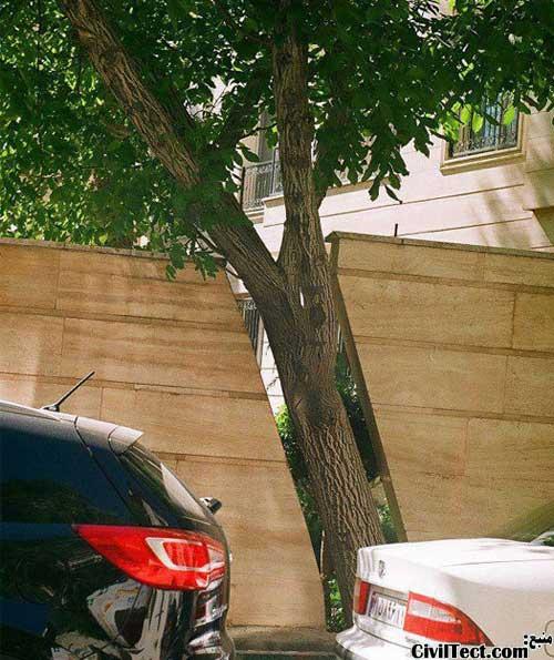 محافظت از درختان - فرهنگ محافظت از محیط زیست