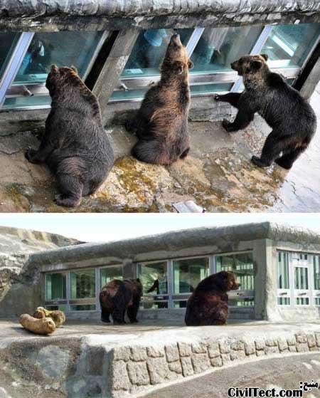 تماشای خرسها