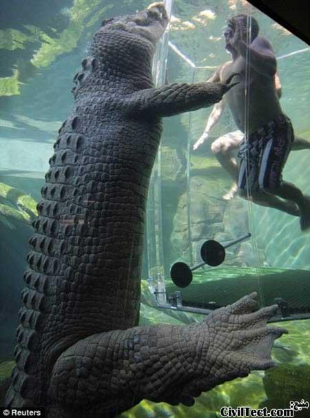 قفس شیشه ای بازدید از تمساح