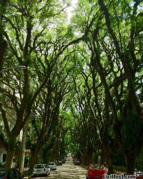 خیابان تونل سبز در برزیل