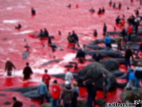 شکار دسته جمعی نهنگ