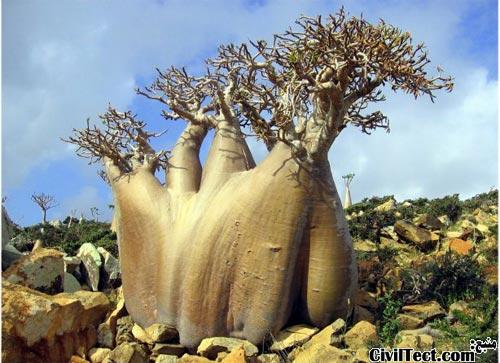 عجیبترین جزیره کره زمین از لحاظ گونه های گیاهی