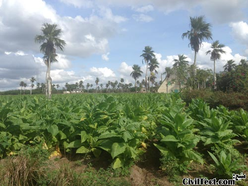 مزارع وینیالس (Viñales)